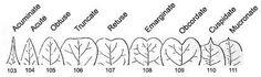 leaf tips - Google Search