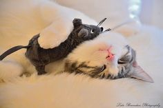 Mishi and his Mouse, via Flickr.