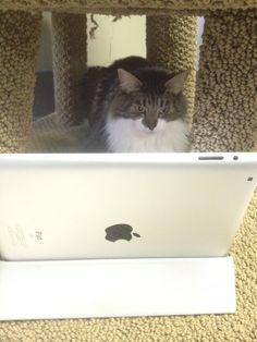 Mazzie watching the iPad