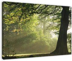 Sunbeams van Dirk van Egmond, op dibond, canvas, ingelijst of als poster.