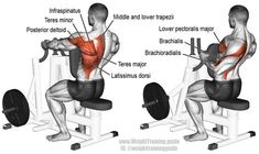 Machine one arm row. A compound exercise. Target muscle: None. Multiple muscles act in synergy. Synergistic muscles: Latissimus Dorsi, Teres Major, Rhomboids, Middle and Lower Trapezii, Infraspinatus, Teres Minor, Posterior Deltoid, Sternal (Lower) Pectoralis Major, Brachialis, and Brachioradialis. Dynamic stabilizers (not highlighted): Biceps Brachii and Triceps Brachii (especially the Long Head).