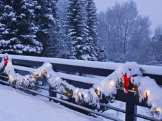 I love it when it there is christmas lights with snow on them!  so pretty! Amazing Christmas Lights