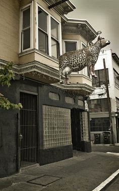 Holy Cow Bar #sanfrancisco San Francisco Sights, San Francisco Bars, Pint Of Beer, Nightlife, Architecture Design, Whimsical, Cow, Old Things, California