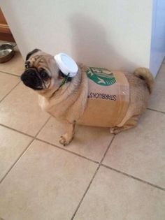 12 Pugs That Are Ready To Trick or Treat - Blessings.com
