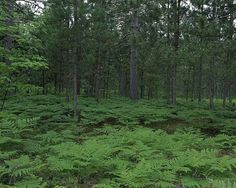 Seney National Wildlife Michigan Fairy Forest