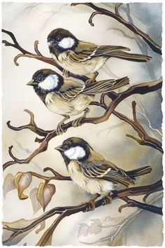Bergsma Gallery Press::Paintings::Nature::Birds::Misc. Birds::Out on a Limb - Prints