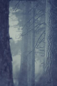 Snow in forest by Corey Holms