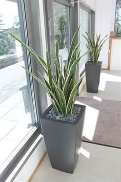 Easy and Fun Tips for Designing Your Indoor Garden living room - Having indoor plant decor may also House Plants Decor, Patio Plants, Plant Decor, Indoor Plants, Living Room Plants Decor, Indoor Gardening, Vegetable Gardening, Garden Plants, Gardening Tips