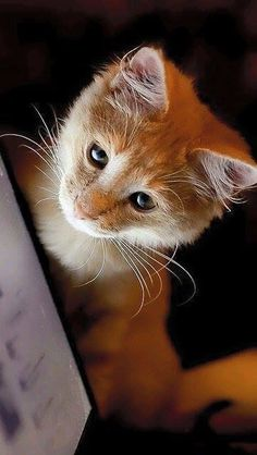 Image via We Heart It #babyanimals #cats #cuteanimals #kitten