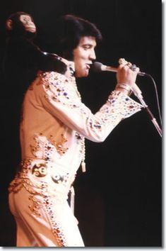 Elvis with monkey on back Las Vegas show September 3, 1973