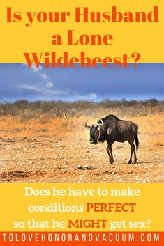 PIN wildebeest husband - Is Your Husband a Lone Wildebeest? Sexless Marriage, Intimacy In Marriage, Marriage Help, Strong Marriage, Marriage Relationship, Marriage Advice, Relationships, Biblical Marriage, Christian Couples