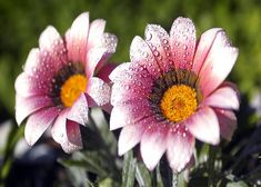 Descargar Imagenes De Flores En Hd | Fondos De Pantalla Para Celulares