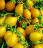 Heirloom yellow pear tomatoes