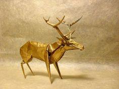 Roosevelt Elk by dargelirli, via Flickr