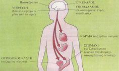 Από την Κατερίνα Μπουσούνη Σύμφωνα με την Αγιουρβέδα υγεία δεν σημαίνει απλώς απουσία ασθένειας. Είναι η αρμονική αλληλεπίδραση των συναισθημάτων, της διανόησης, του σώματος, των πράξεων, της συμπεριφοράς και του περιβάλλοντος στο οποιο ζούμε. Όλα αυτά τα στοιχεία είναι εξίσου σημαντικά. Ισορροπία σημαίνει υγεία στην αγιουβερδιική φιλοσοφία. Όταν φτάνουμε σε κατάσταση ισορροπίας, αποκτούμε εσωτερική αρμονία …