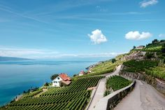 white and brown house near green leafed plants Lavaux in Switzerland is a UNESCO world heritage site, it's composed of 830 hectares of terraced vineyards. Brown House, Grand Cru, Explore Travel, Paradise Island, World Heritage Sites, Wine Country, Hd Photos, Best Funny Pictures, Switzerland
