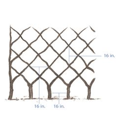 good article on how to espalier fruit trees