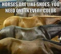 Funny Horse Memes, Funny Horse Pictures, Funny Horses, Cute Horses, Funny Animal Memes, Pretty Horses, Horse Love, Funny Humor, Horse Humor