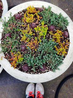 image from http://gardenrooms.typepad.com/.a/6a00e008cbe8b5883401bb081bddae970d-pi