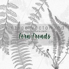 Fern Clipart Fern Fronds Botanical Illustration Ferns Digital Art Graphic Design Resource Vintage Fern Fronds Image Clip Art Vector EPS PNG
