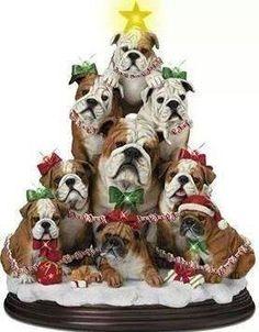 #english #bulldog #englishbulldog #bulldogs #breed #dogs #pets #animals #dog #canine #pooch #bully #doggy #christmas #santa #presents #merrychristmas #winter #snow #newyear