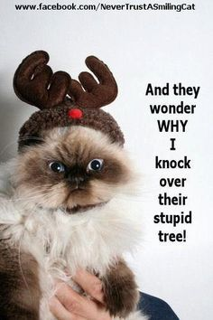 And they wonder why I knock over their stupid tree!