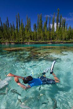 Feeding fish, Isle of Pines, New Caledonia