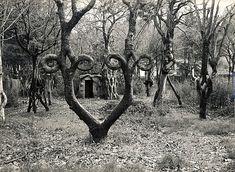 Las esculturas vivientes de Alex Erlandson han creado un movimiento de arte con árboles; sus creaciones pueden observarse todavía en los Gilroy Gardens.