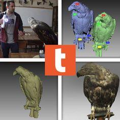 Threeding préserve les espèces animales avec la 3D  http://www.lifestyl3d.com/cui-cui-fait-le-moineau-croa-croa-fait-le-corbeau-bzz-bzz-fait-limprimante/