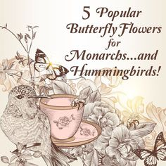 5 Nectar Flowers for Attracting Monarchs AND Hummingbirds to your Garden.