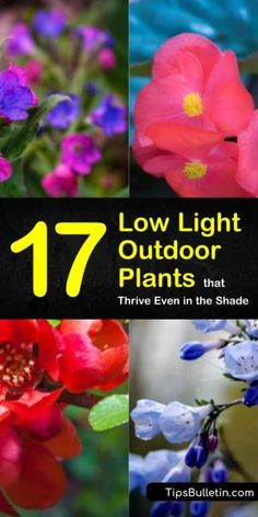 17 Low Light Outdoor Plants that Thrive Even in the Shade – House Plants Low Light Plants, Sun Plants, Shade Plants, Indoor Plants, Outdoor Pots, Outdoor Flowers, Outdoor Gardens, Outdoor Ideas, Outside Plants