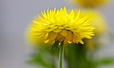 So beautiful flower!