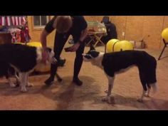 Impulse Control, Dog Training Videos, Two Dogs, Patience, Game, Gaming, Toy, Games