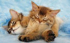 Cuddle buds.