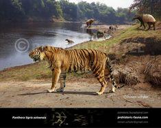 Prehistoric Animals, Terra, Predator, Fossils, Southeast Asia, Geology, Habitats, Paleo, Old Things