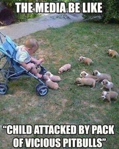 Pack of pitbulls. How vicious. It is true that some dogs (of any breed) are vicious. Like some humans can be. But do we try and kill all the violent humans as we do pitbulls? Funny Animal Memes, Dog Memes, Funny Animal Pictures, Cute Funny Animals, Funny Cute, Funny Dogs, Cute Pictures, Hilarious Memes, Funniest Pictures
