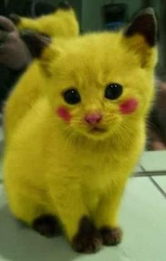 Pokemon's so cute Baby Animals Pictures, Cute Animal Photos, Animals And Pets, Funny Animals, Cute Animals, Pikachu Cat, Cute Pikachu, Cute Pokemon, Kittens Cutest