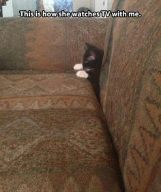 Dump A Day Attack Of The Funny Animals - 24 Pics