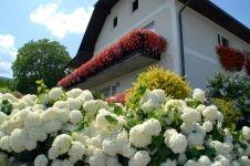 Nejkrásnější statek Hydrangea, Ethnic Recipes, Farm Cottage, Nice Asses, Hydrangeas, Hydrangea Macrophylla