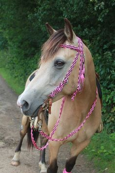Gewoven hoofdstel en teugels Braided bridle and reins Paracord Ideas, Paracord Projects, Horse Bridle, Horse Saddles, Horse Supplies, Dog Collars & Leashes, Cute Horses, Collar And Leash, Livestock