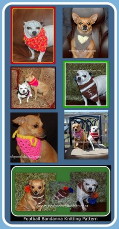 A Collection Of Free Dog Bandanna Crochet and Knit Patterns - For Any size Dogs, Cats or Pets. http://poshpoochdesignsdogclothes.blogspot.com/2015/03/free-bandanna-patterns-for-dogs-cats-or.html