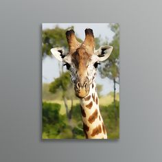 Add a little of Africa to your home with this photo turned oil painting of a Giraffe on the Masai Mara. Giraffe, Africa, Painting, Animals, Felt Giraffe, Animales, Animaux, Painting Art, Giraffes