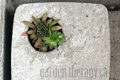 home-made concrete planters. Also this blog kind of rocks if you're into gardening.
