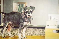 De nuestras aventuras con Froycito hallanando la vida #dogfriendly en Buenos Aires. Esta foto es en nuestra querida galería @formosagaleria de Guille Baiguera y fue la primera sesión de fotos de nuestro libro Buenos Aires Guau - Lugares Dog Friendly.