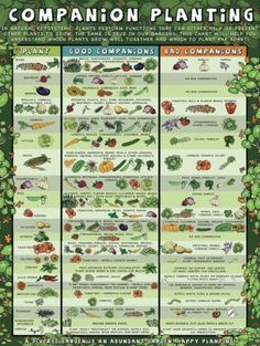 Quick Reference For Companion Planting