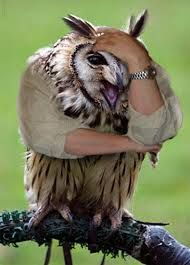 Bildergebnis für Birds with arms