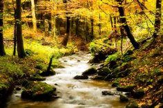 Autumn in Thuringen
