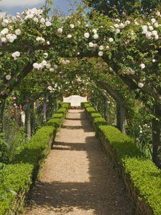 Arches of Roses, Mottisfont Abbey Garden, Hampshire, England, United Kingdom