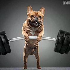 Batpig & Me Tumble It • #FrenchieBulldog #FrenchBulldog #BulldogFrances...