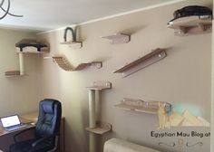 Playground for cats - a climbing wall, Cat Walkway, Rambo 3, Cat Climbing Wall, Cat Wall Shelves, Cat Gym, Cat Heaven, Cat Towers, Cat Playground, Cat Enclosure
